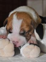1 weeks old