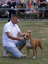 Kobos Golden Eye Debrecen Cacib 2008